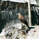 Fauna 48