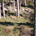 Fauna 36