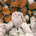 Fauna 9